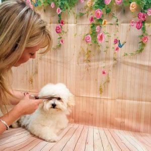 dog groomer melbourne